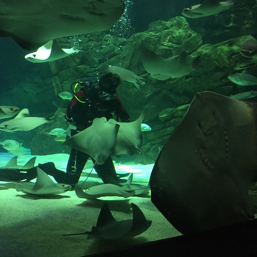 Ray feeding time at Ripley's Aquarium in Toronto