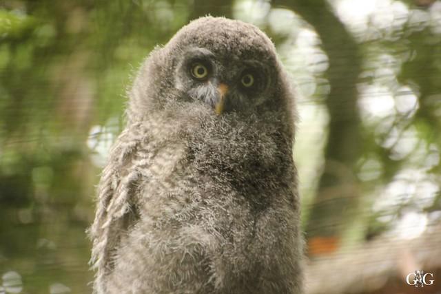 Besuch Zoo Rostock 09.07.201651