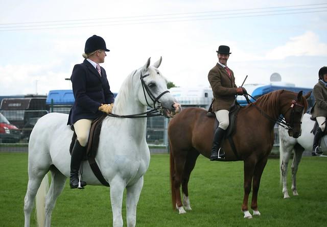 Ridden Arabians