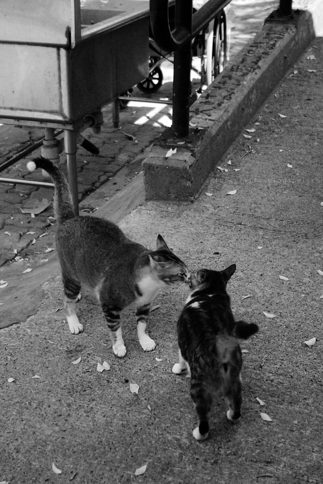 梅窩貓兒們