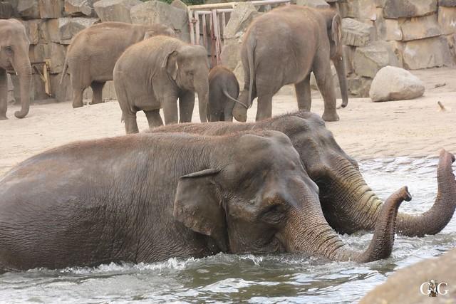 Tierpark Friedrichsfelde 29.05.201679