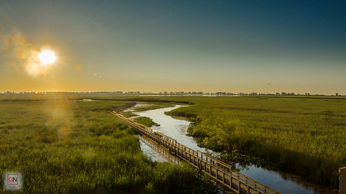 Marsh Boardwalk, Sunrise at Point Pelee