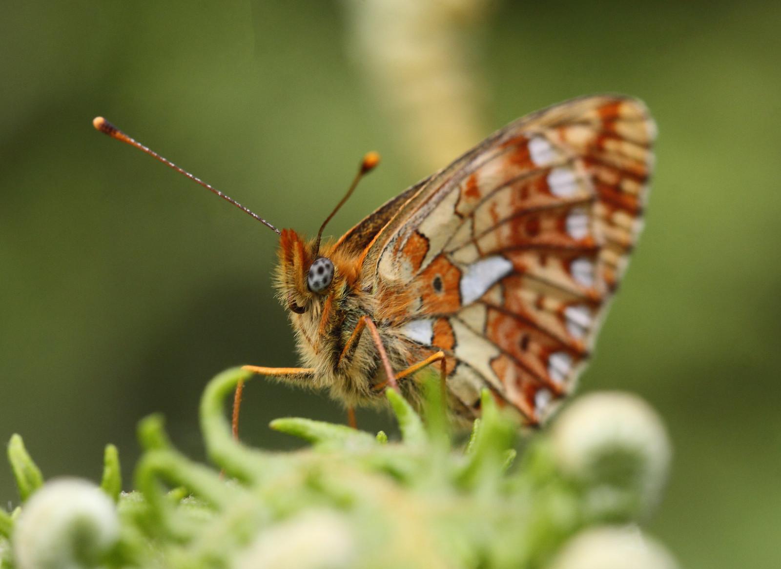 butterfliesandrooks0036