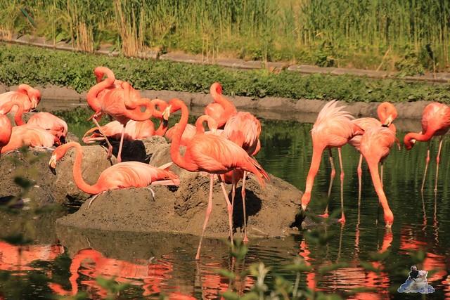 Tierpark Berlin 29.05.2016   06