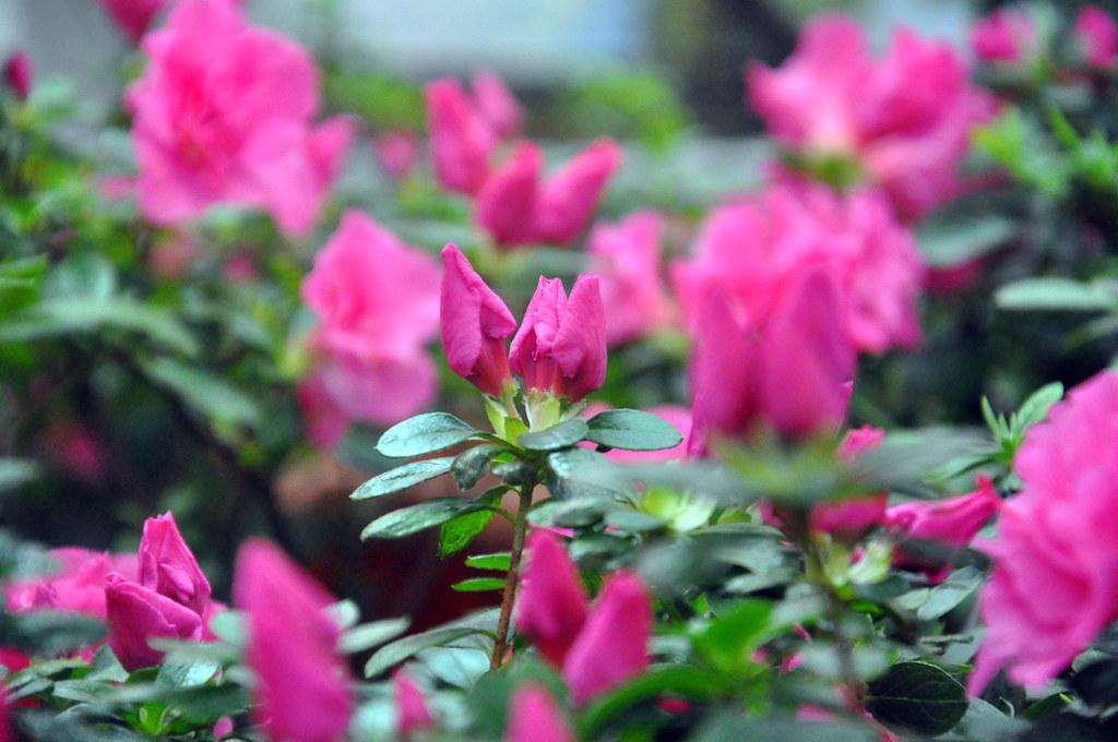 Ботанический сад DSC_0232