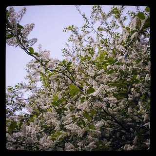 Pretty sight but smell is not to my taste, for #365days project, 132/365