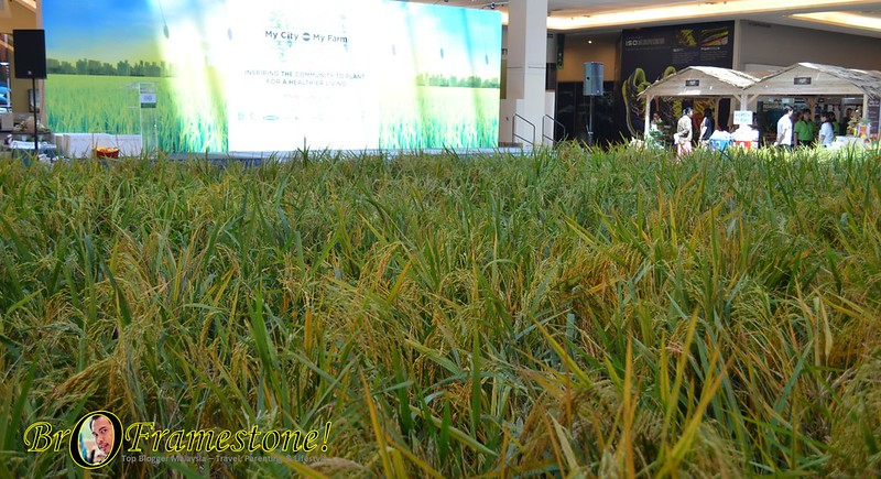My City • My Farm 2016 at Tropicana City Mall