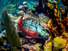 Parrot fish on coral reefs