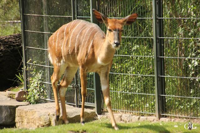 Besuch Zoo Berlin 22.05.1673