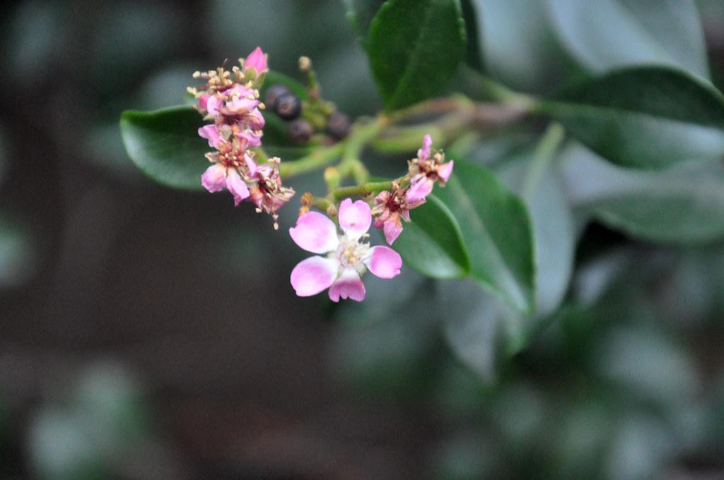 Ботанический сад DSC_0163