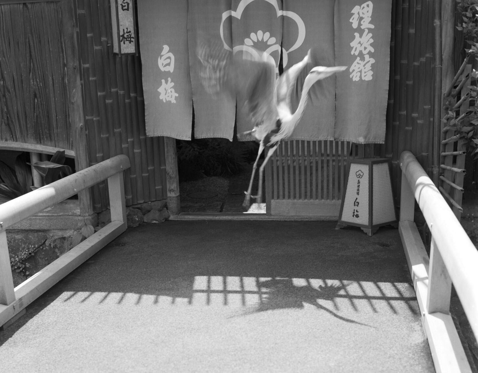 Japanese Heron   by Mark Dries