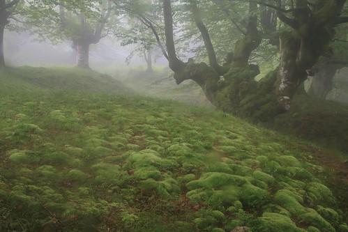 Parque Natural de #Gorbeia #Orozko #DePaseoConLarri #Flickr - -491