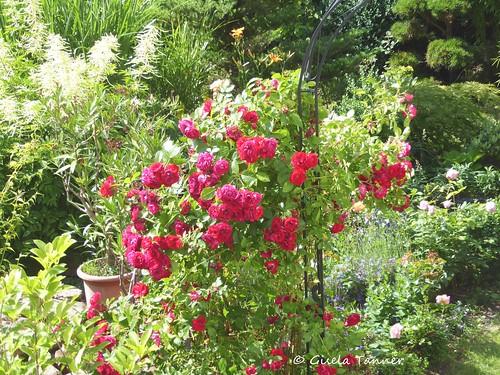 Garten Juni 2016