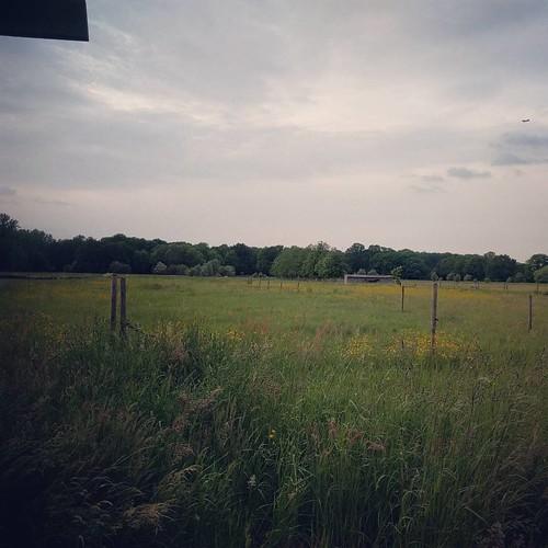 Stukje paradijs 💚 #mijndorpschoondorp #herentlove #outdoors #vlaamsevelden #inhetgroen