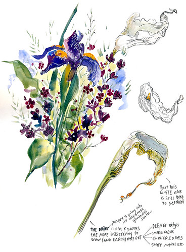 Sketchbook #96: Irises and calla flowers
