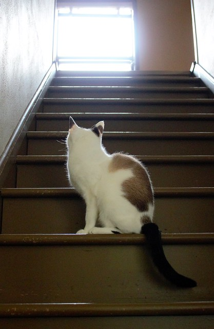 John on the stairs