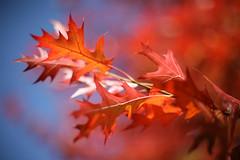 Herbst im Bürgerpark 7