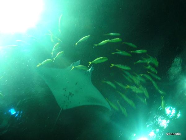 sea life in Grand Aquarium, Ocean Park Hong Kong