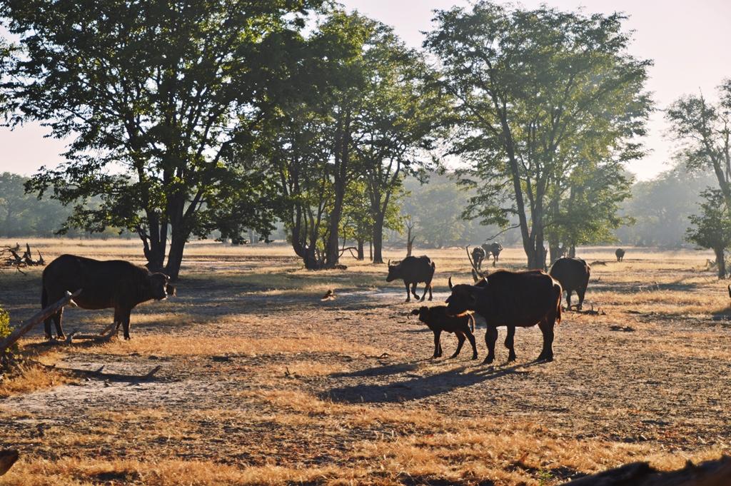 safari21