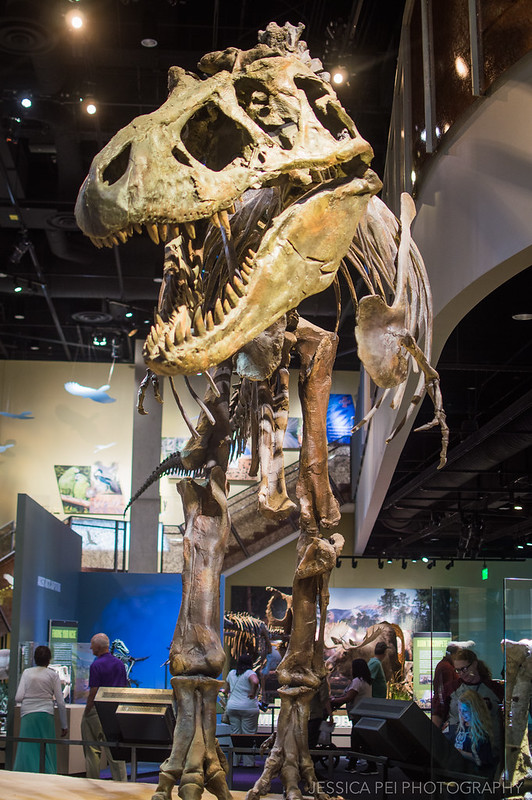 Perot Museum of Natural Science Dinosaur