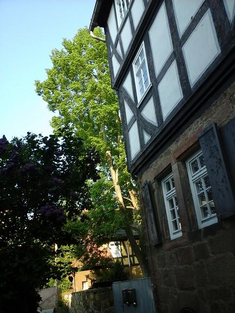 Hedgefairy: Weidenhausen, Marburg