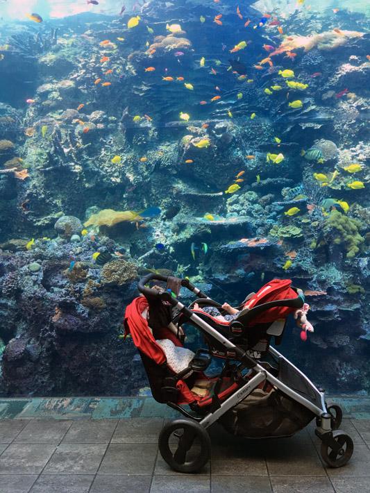 101615_aquarium12