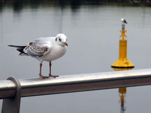 Seagulls pose on our walk along Belfast's Marine Trail
