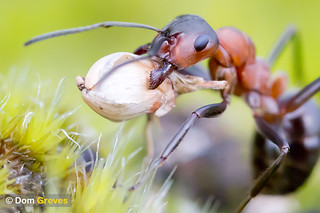 Wood Ant Logistics III | by Dom Greves