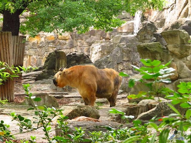 Zoo Berlin 27.05.2016   013
