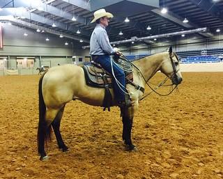 namgis horses bobby lewis roping quarter team hancock dude bucks