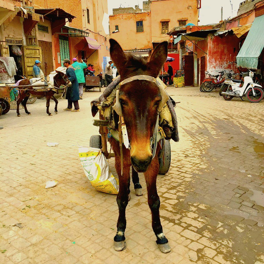 Things To Do in Marrakech - Donkey
