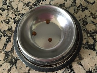 Tabby food bowl