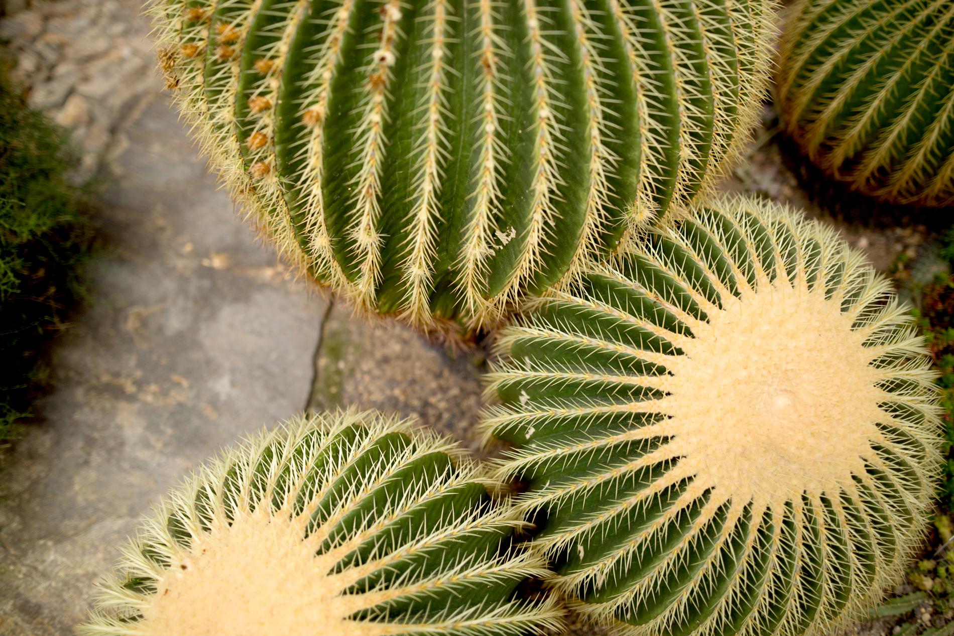 cactus cacti botanical garden berlin a.p.c. halfmoon bag saint laurent espadrilles wedges hm silk shirt silver watch rosefield ootd outfit fashionblogger ricarda schernus cats & dogs modeblog 7