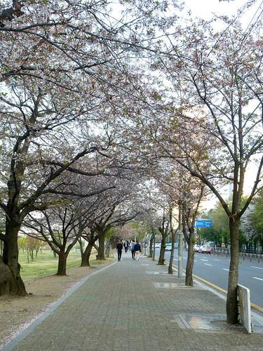 C16-Seoul-Parc Yeouido-Fete-j6 (2)
