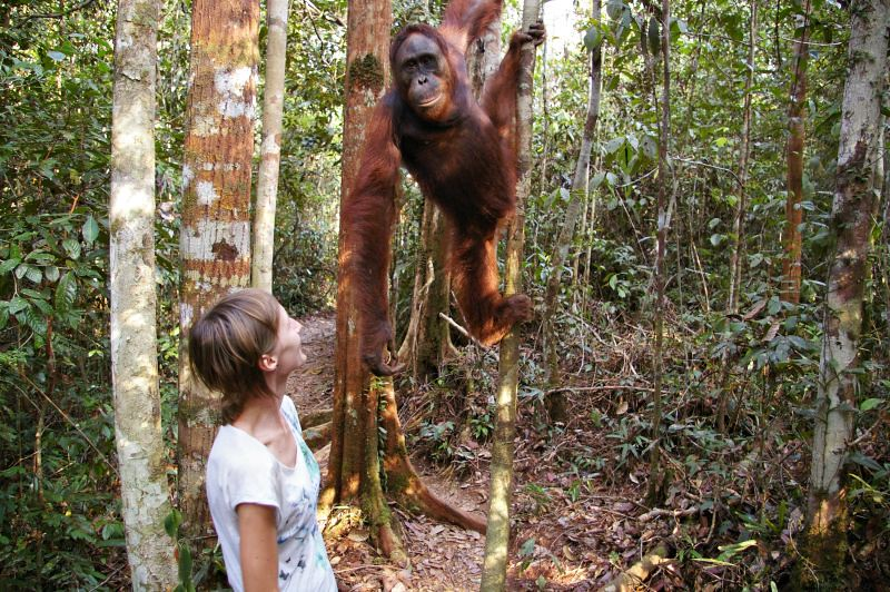 meeting-with-orangutan-Borneo