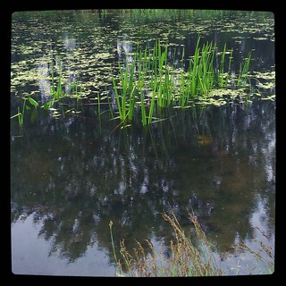 Pond in nearby park, for #365days project, 189/365