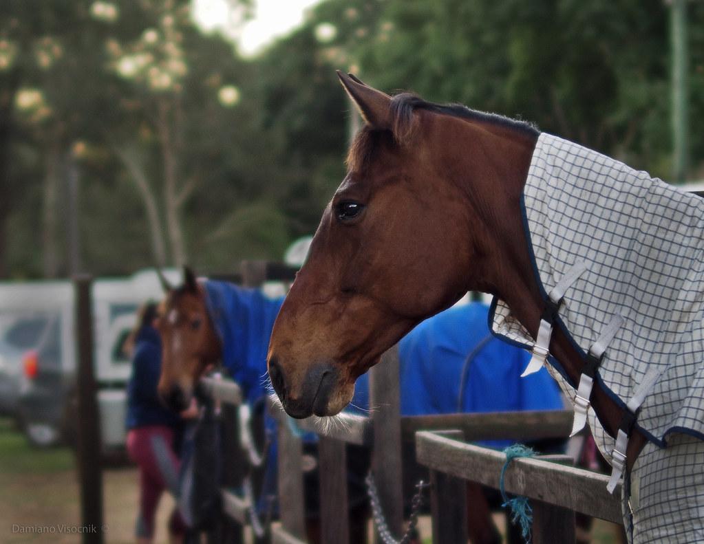 Horse portrait_1_c