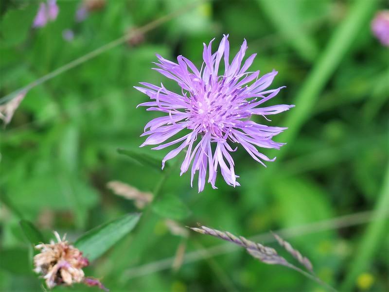 Wild flower 18.06 (1)
