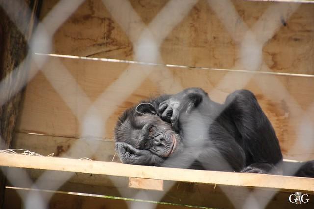 Sonntags-Besuch Zoo Berlin 03.07.201637