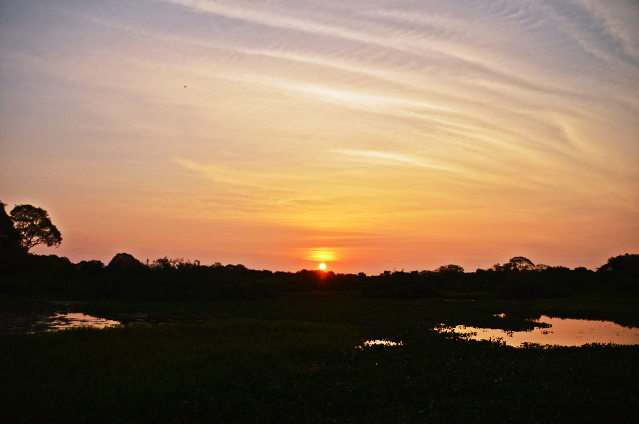 pantanal6