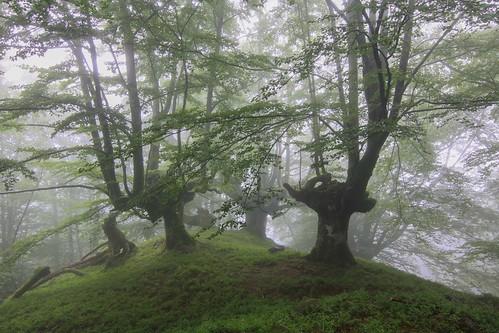Parque Natural de #Gorbeia #Orozko #DePaseoConLarri #Flickr - -612