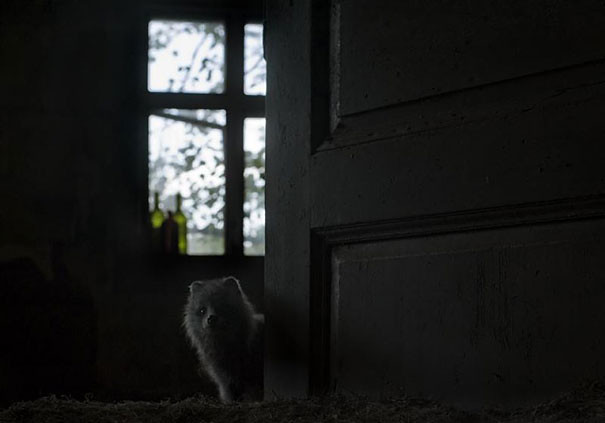 abandoned-house-animals-kai-fagerstrom-9