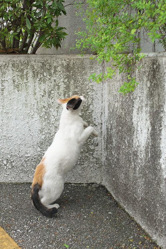 東京路地裏散歩 北千住のネコ 2016年7月18日