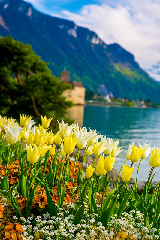 tulips, flowers, Chillon Castle, Lake Geneva, the Alps