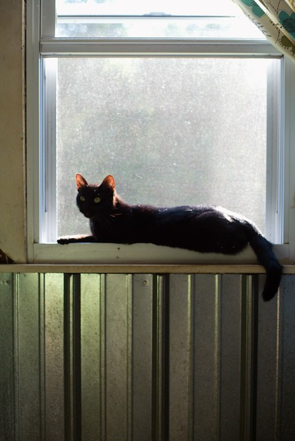 Luna on the windowsill