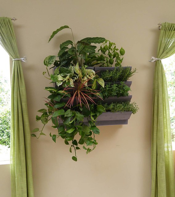 I love our new indoor garden from Vertical Gardens Northwest! Check out more: http://www.verticalgardensnw.com/