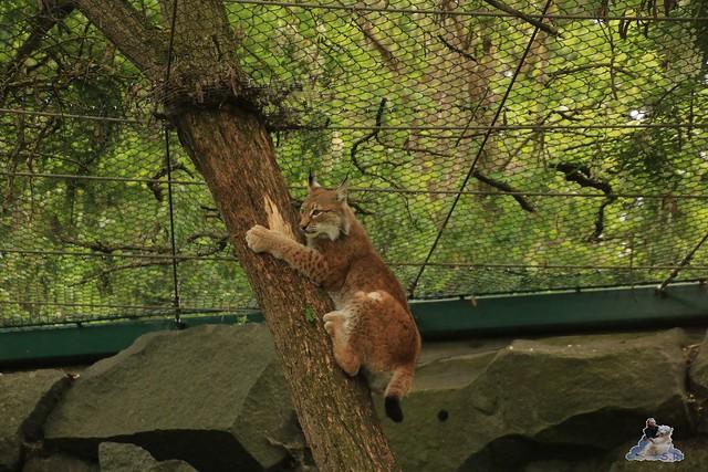 Tierpark Berlin 28.05.2016  0179