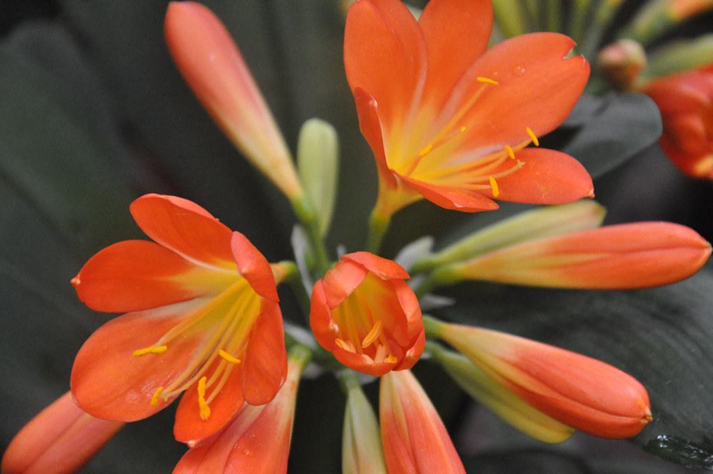 Ботанический сад DSC_0132