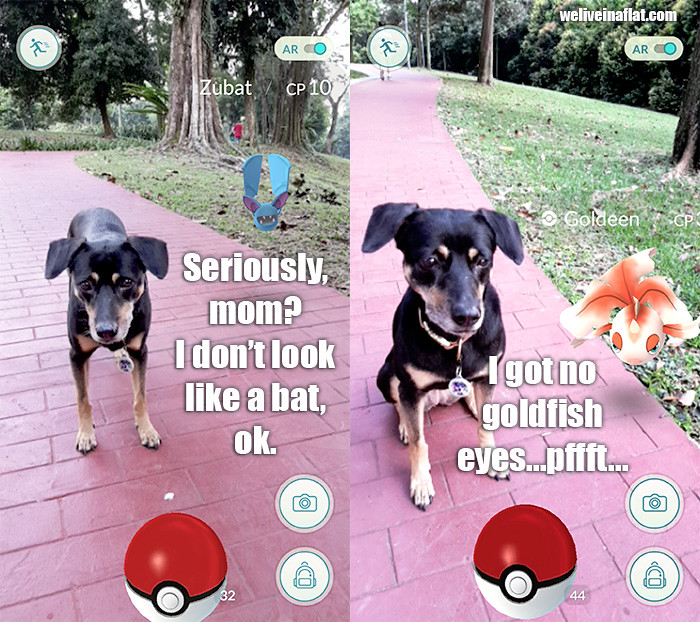 Pokemon-GO-goldeen-dog-bat