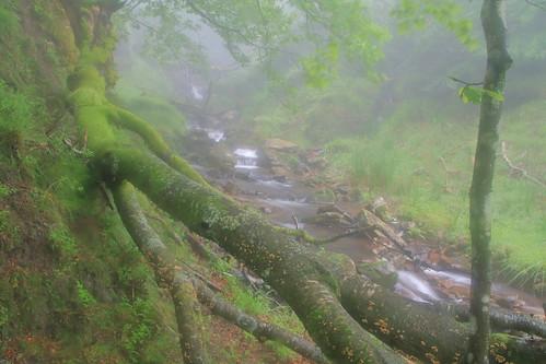 Parque natural de #Gorbeia #Orozko #DePaseoConLarri #Flickr -101